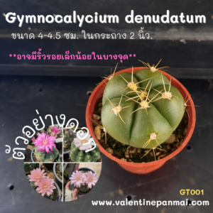 Gymnocalycium denudatum