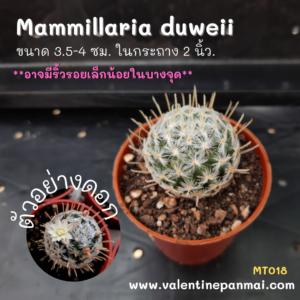 Mammillaria duweii